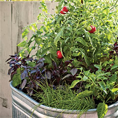 How To Make Kitchen Garden In Pots by Single Container Vegetable Garden Sunset