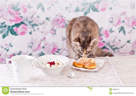 Cottage Cheese For Cats by Thief Cat Vector Cartoondealer 25886143