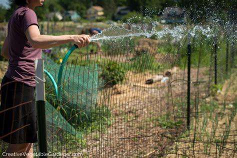 Creative Vegetable Gardener How To Water Your Vegetable How Often To Water Vegetable Garden