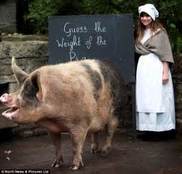 Cmon Ladiesbe Pigs by She S Quite A Saddleback Pig Miss Winky Is