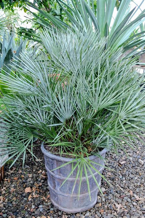 tropical plant crossword clue my growing tropical plant collection the martha stewart