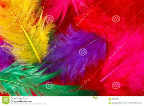 colored feathers bright colored feathers background stock photo image