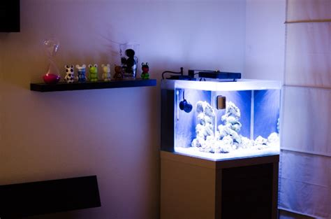 fluval sea 25000k marine and reef light the fluval reef aquarium m40 aquarium journals