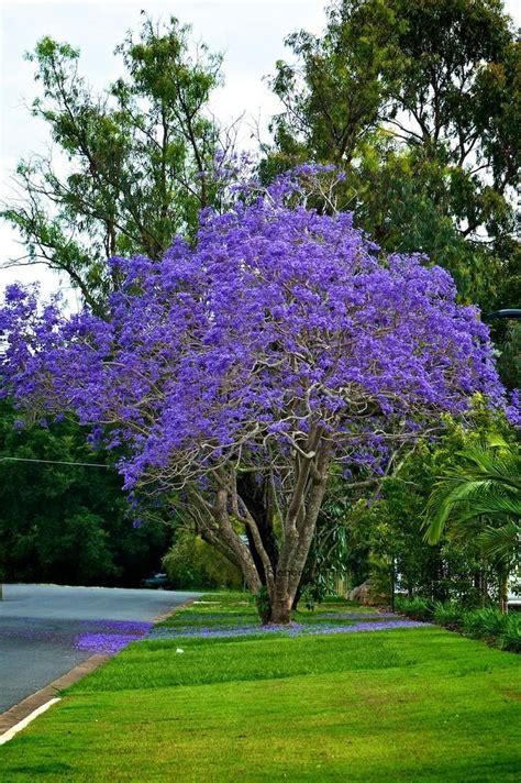 small pink tree 25 best zone 9 gardening ideas on purple