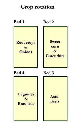 landscape layout rotation demonstration of a 4 bed crop rotation system garden