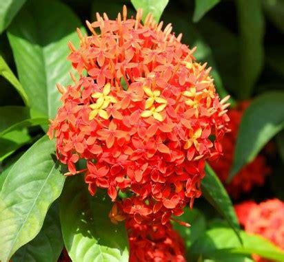 gambar bunga tercantik  dunia beserta namanya kumpulan