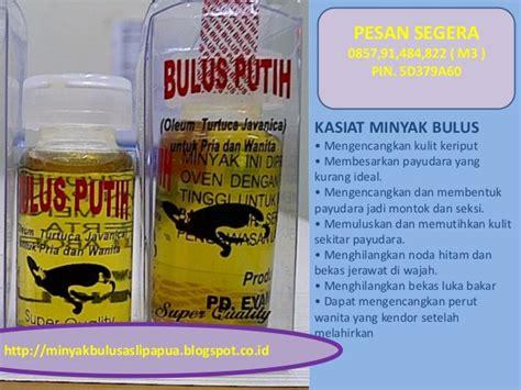 Minyak Bulus Papua Original harga minyak bulus papua asli minyak bulus asli
