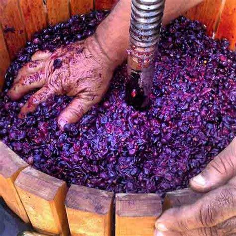 Imagenes De Como Hacer Uvas | c 243 mo hacer vino casero