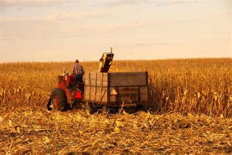 who invented the corn 10 interesting facts about corn well done stuff