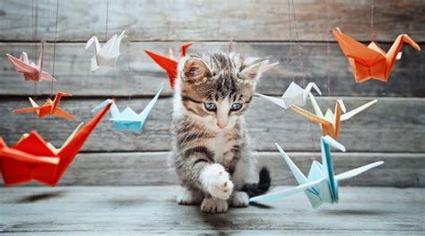 allontanare i gatti dal giardino vegamami dalla parte degli animali l che dai