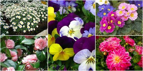 fiori da giardino primaverili fiori da balcone creare uno spazio green roba da donne