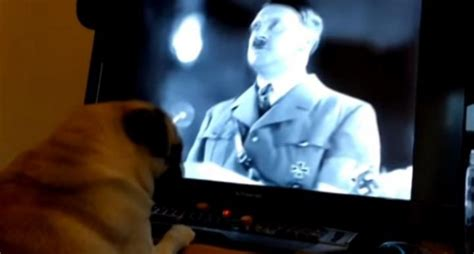 natzi pug scottish arrested for pug prank posted to and