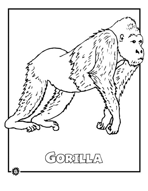 coloring page jungle animals gorilla colouring in rainforest study pinterest
