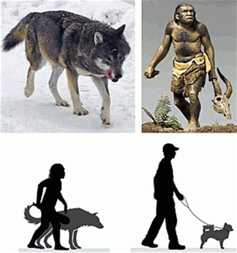 evolution of dogs a toolkit the greatest invention since the emergence of dogs all