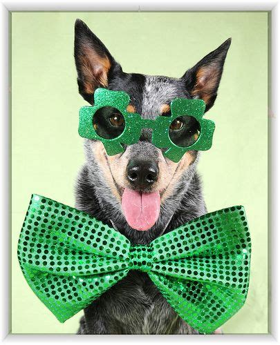 boarding albuquerque 428 best images about st s day dogs on