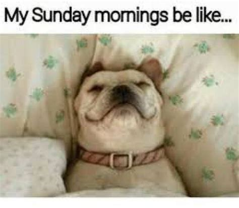 Sunday Morning Memes - sunday memes funny sunday night memes and pics