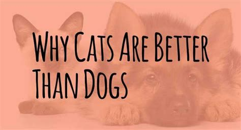why are better why cats are better than dogs seriously cat info