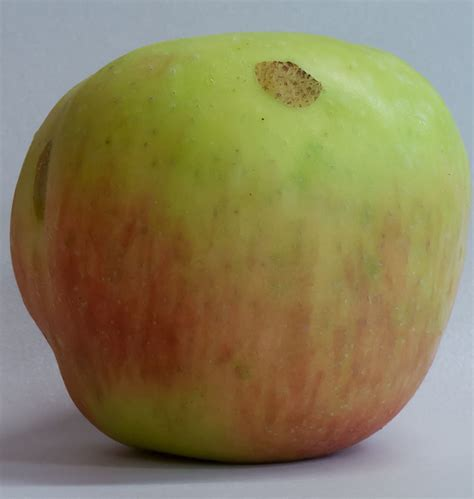 Sn Sleep Fruit Eat Apples Door Creek Orchard