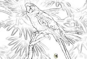 Marvelous Coloriage A Dessiner Sur L Ordinateur #9: Coloriage-d-un-perroquet-t9q.jpg