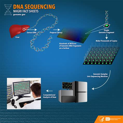 new year animal sequencing dna sequencing fact sheet national human genome research
