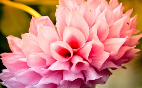 hd flower images flower images hd share online
