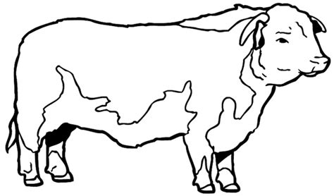 hereford cow coloring page hereferd bull coloring pages printable hereferd best