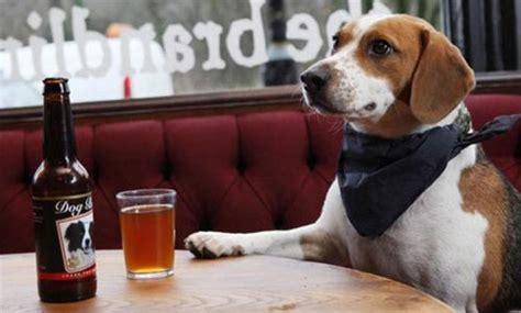 legge sull ingresso dei cani nei luoghi pubblici ingresso libero per il al bar o al ristorante