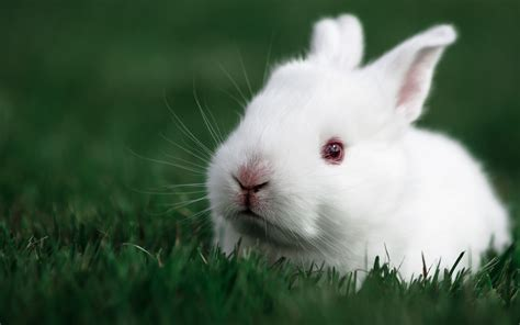 black and white rabbit wallpaper ultra hd animal wallpapers 4k mobile