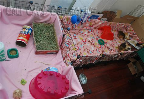 guinea pig bedding ideas using fleece for bedding in your guinea pig cage party