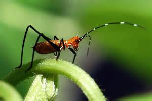 Insect Garden Pests - an un welcome visitor vegetable garden blog