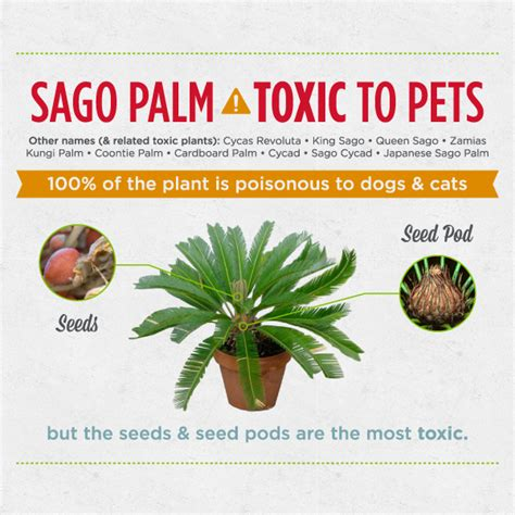 what plants are poisonous to dogs 6 seriously dangerous plants for dogs cats 171 wondercide blog