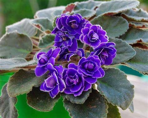 piante con fiori piante con fiori alberi latifolie piante con fiori