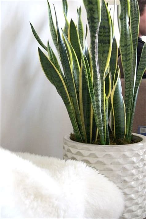 Top 5 Indoor Plants and How to Care for Them