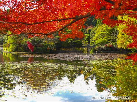imagenes de kyoto japon jap 211 n kioto osaka y nara nuria castilla el colibr 237
