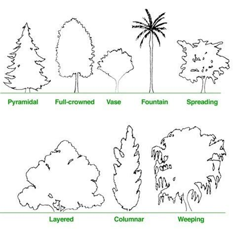 What Type Of Tree Is Used To Make Paper - tips on the best ways to make the most from your landscape