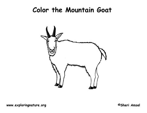coloring pages mountain goat mountain goat coloring page