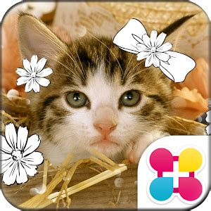 chaton apk app cat wallpaper chaton apk for windows phone android and apps
