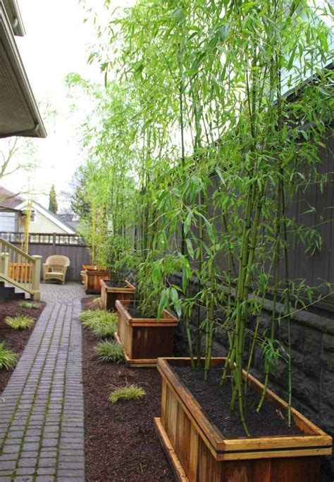 Bamboo Garden Design Ideas Bamboo In The Garden A Fascinating And Versatile Plant Houzz Home