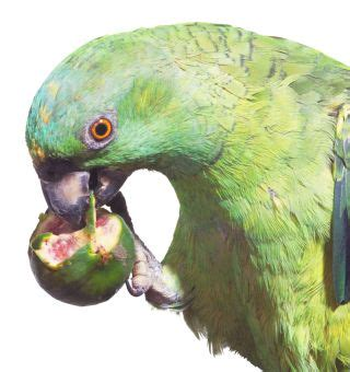 types of parrots parrot facts dk find out