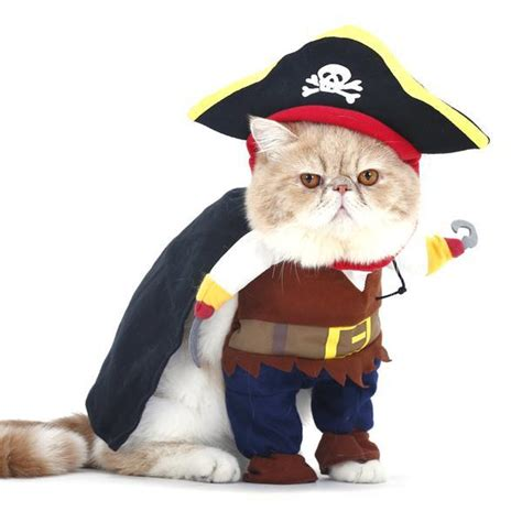 Halloween Decor Home by Pirate Cat Costume Meowingtons