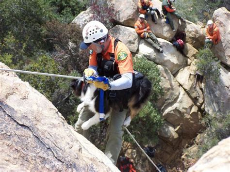 search dogs search dogs play big