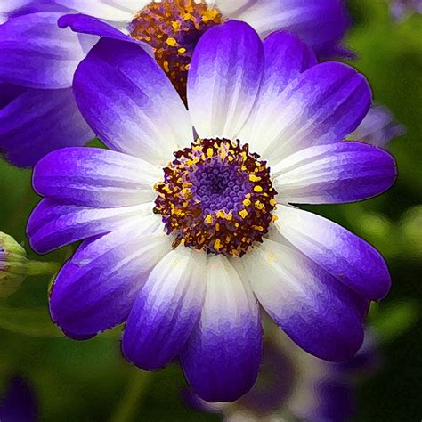 Gamis Purple Flower 1 painted purple and white flower purple and white flower pa flickr