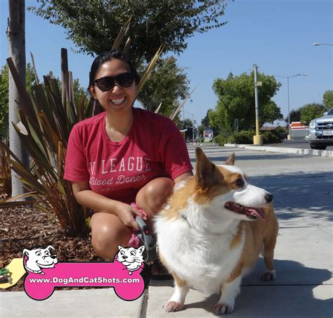 corgi puppies sacramento low cost and cat in northern california corgi archives low cost and