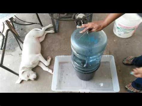 diy automatic water pet feeder automatic feeder diy
