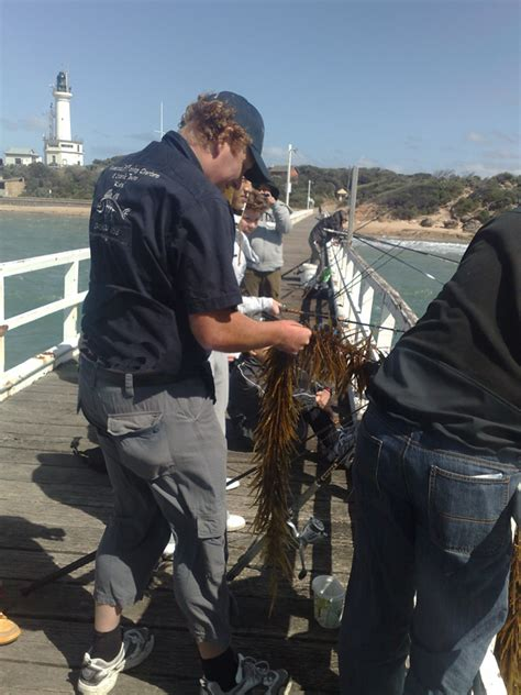 boat tour queenscliff queenscliff fishing charters and scenic tours fishing