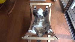 amaca gatti amaca per gatti avr 242 cura di te