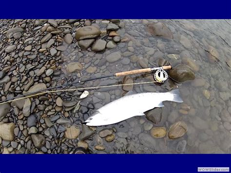 steelhead flies for swinging swinging flies for steelhead