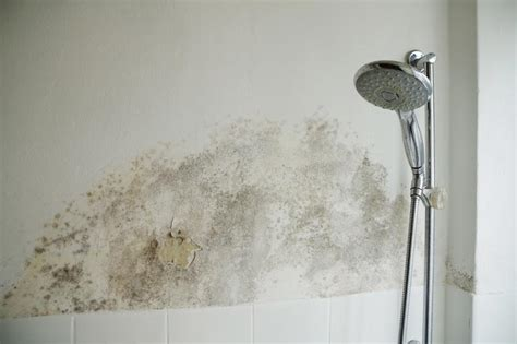 schimmel in dusche entfernen 5279 schimmel im bad so entfernen sie schimmel im badezimmer