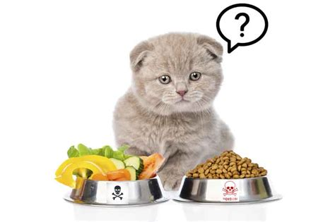 how to your cat like a how to a healthy food for your cat uniquely cats veterinary center