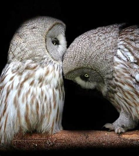 owl lover 1000 images about owls on pinterest beautiful owl owl